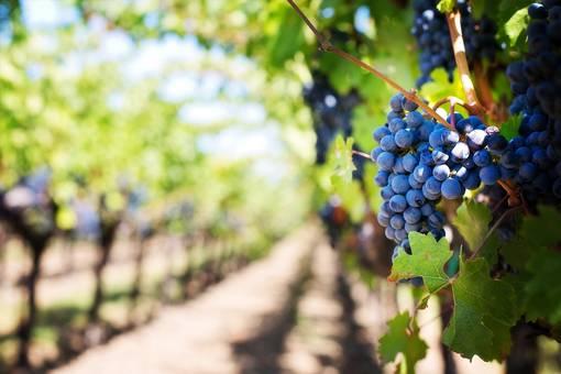 Straße des Weines und der Aromen