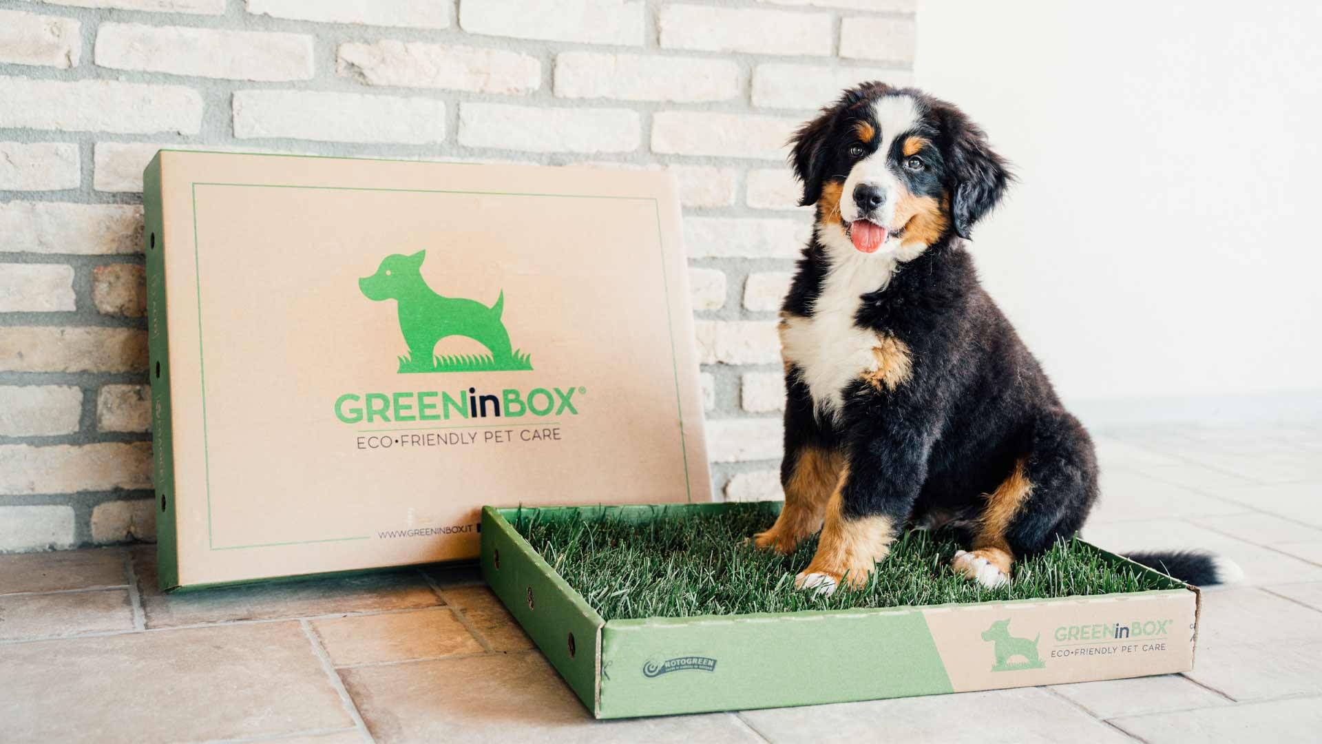 Pet-Friendly & GreeninBox
